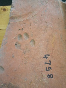 Roman tegula with maker mark and paw print