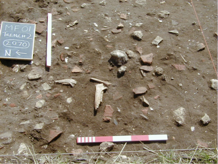 Trench 2 Assemblage of tegulae, jaw bones and votive coins